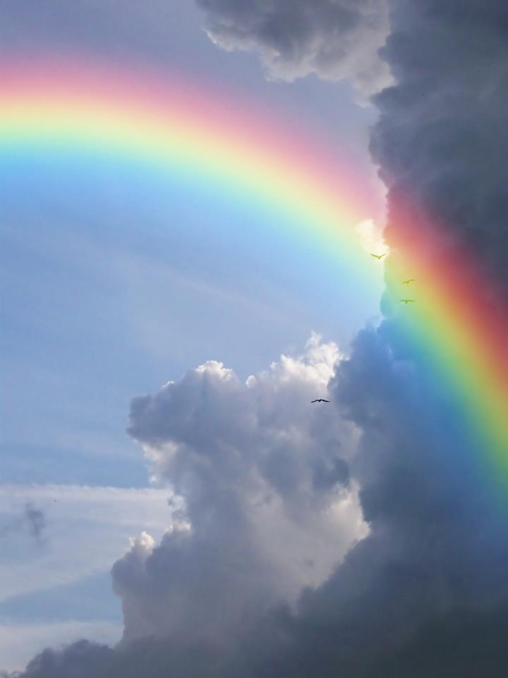 Sunny Background Royalty Free Stock Photography - Image ... |Real Rainbows In The Sky On A Sunny Day