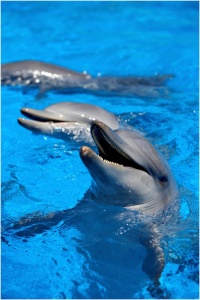 Dolphins at Pet Porpoise Pool in Coffs Harbour
