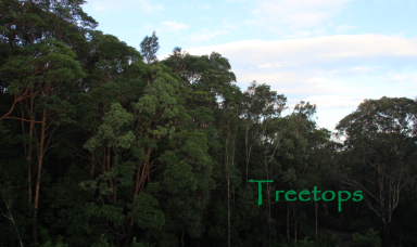 You're in the Treetops at Treetops.