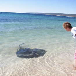 I would much rather swim with these friendly stingrays, than swim with the dolphins!! (WA)