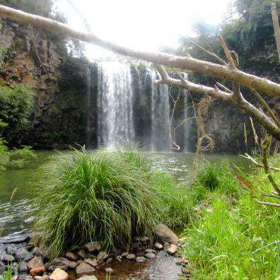 Whilst in Dorrigo, take a dip in the water pool at Dangar Falls.