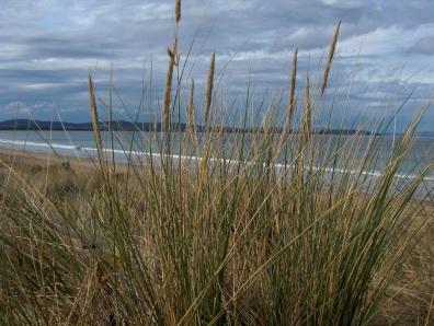 A peek through the reeds at Seven Mile Beach