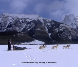 Dog Sledding in the Rockies
