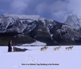 Dog Sledding in the Rockies
