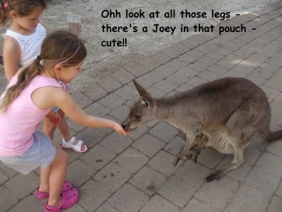 Kangaroo - Text