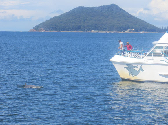 We went on a dolphin cruise and spotted many dolphins swimming in the huge harbour, while also watching people out enjoying the harbour fishing, boating and parasailing.