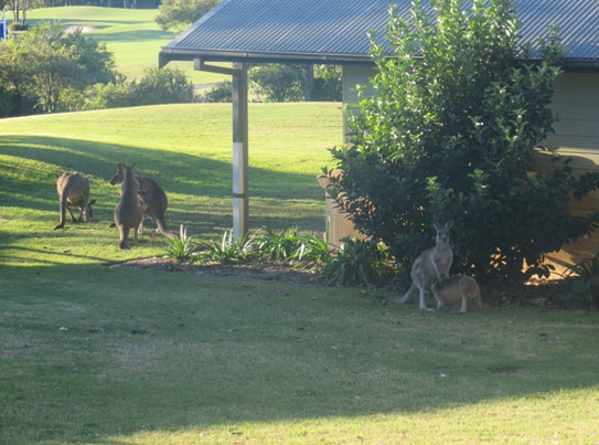 Our accommodation was luxurious and spacious and we enjoyed meeting the local kangaroos who roamed freely around the resort grounds, adding to our experience.