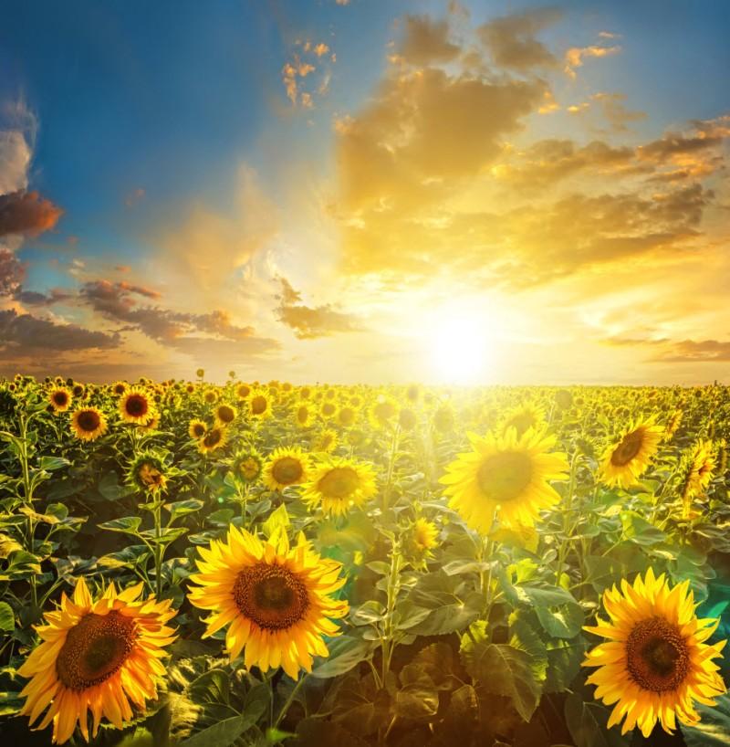 Summer & Sunshine!