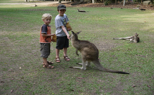 This photo was taken at Australia Zoo which we visited while staying at Golden Beach resort. It was an easy drive from the resort and we had an amazing time. Our boys loved the Croc show and they even got to see their hero, Bindi!