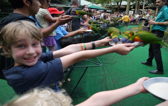 This photo shows the joy on my son's face when feeding the birds at Currumbin Bird Sanctuary, which is a short drive from Kirra Beach resort. This was the absolute highlight of their holiday, we were the first to arrive and the last to leave. They would have gone every single day if they could (and potentially they could have, being so close to the resort….if there wasn't so many other wonderful places to visit and things to do!).