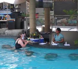 Fiji swim up