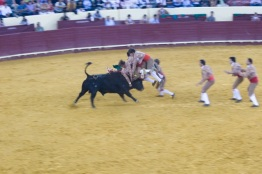 Lisbon Bull Fight - How to tackle the Bull or Not
