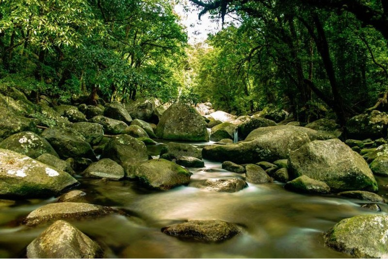 Mossman River – A similar look but with a lot less water to where we went white water rafting on day 5