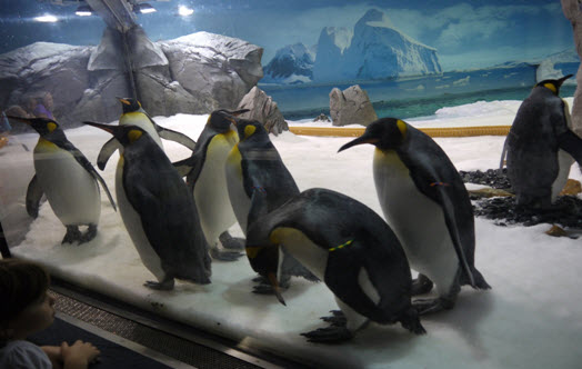 This photo shows our favourite exhibit at Seaworld which we visited on a day trip from Kirra Beach Resort. They were such funny little things, and enjoyed interacting with the kids through the glass, following them around and making everyone giggle!