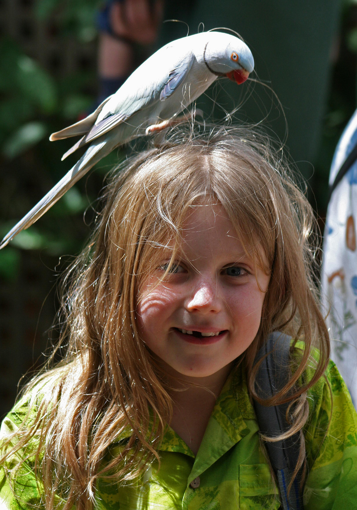 The most treasured memory of our Cairns trip was a visit to Birdworld, which was an easy drive from the resort. The children had a wonderful time making friends and hand feeding a huge range of spectacular bird life; one of whom kept a memento of our visit, with some extra nesting material!