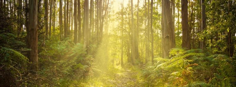 Take a wander down a quiet path