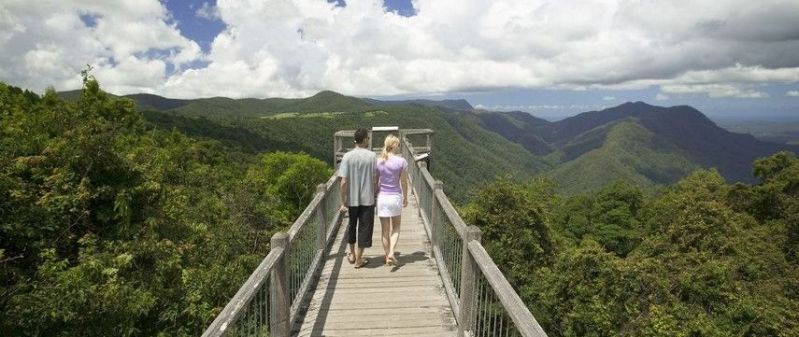 Skywalk at Dorrigo National Park