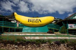 Iconic Coffs Harbour - Family day our at the Big Banana
