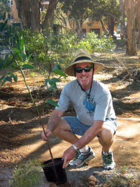 Rob McLaughlin sponsored and planted a Swamp Mahogony