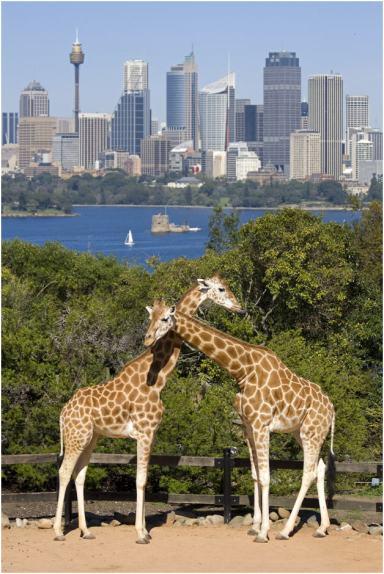 Taronga Zoo   WordlMark South Pacific Club by Wyndham
