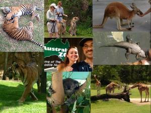 zoo 26112014