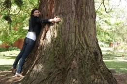 Majestic tree - WorldMark Ballarat