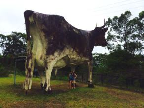 The Big Cow, Yandina
