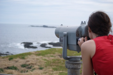 Phillip Island - Binoculars at the nobbies